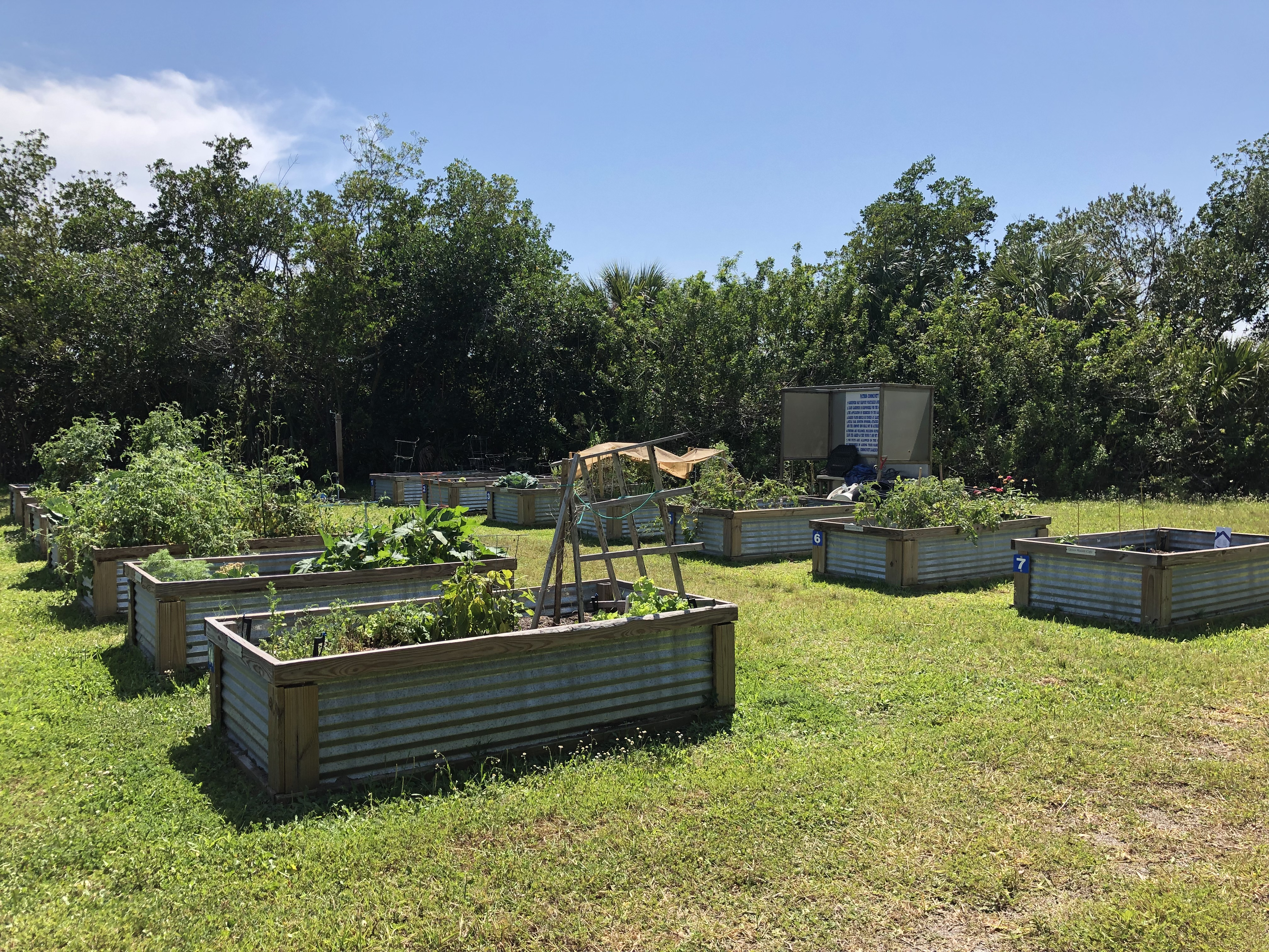 Photo of Community Garden showing all raised garden beds