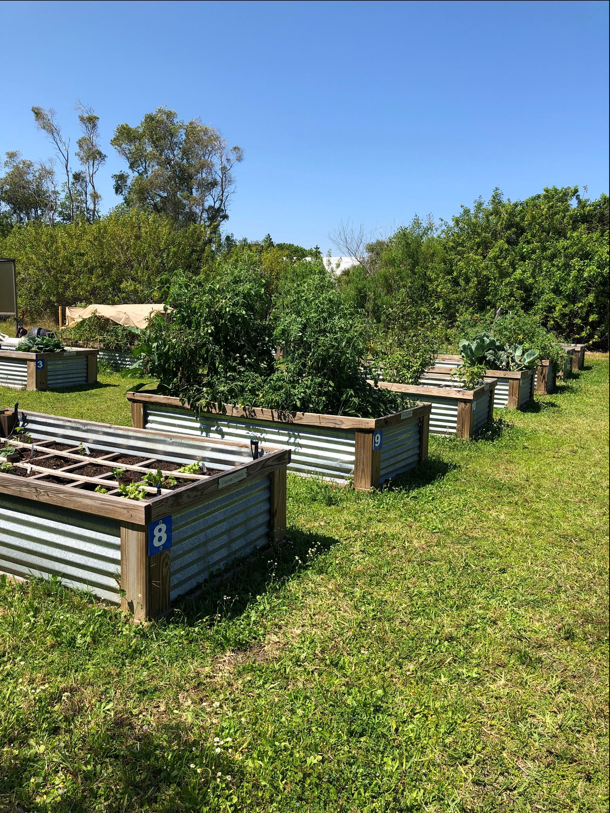 Photo of raised garden beds